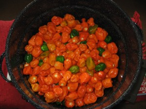 Picture of a Pot of Habanero Peppers