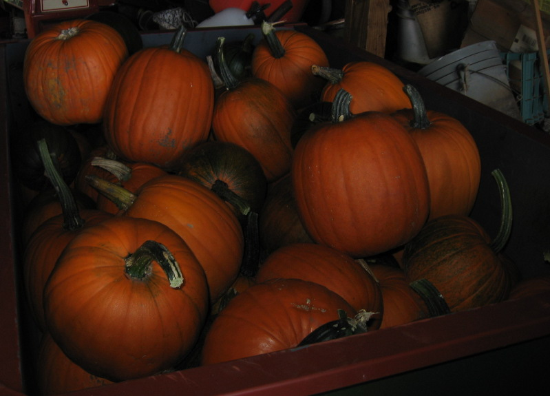 Picture of a trailer full of Pumpkins