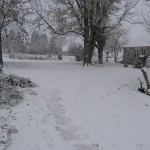 Picture of Snow